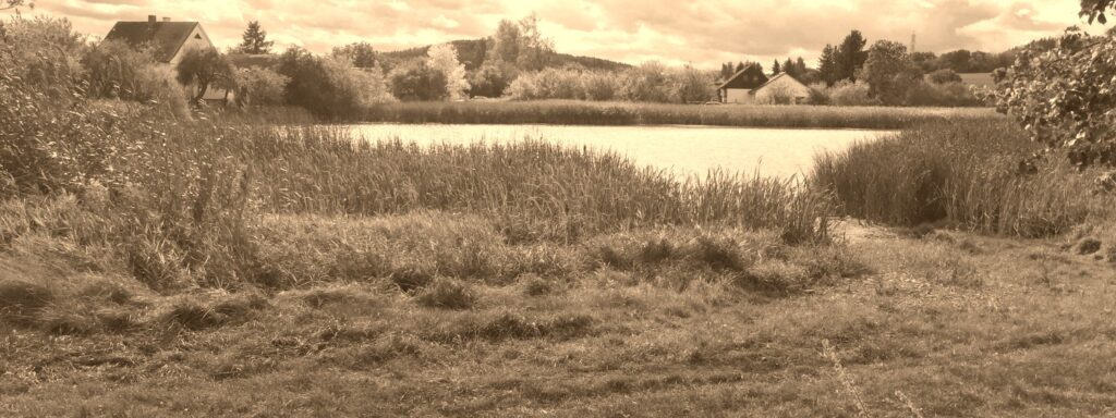 Pastuska rybník